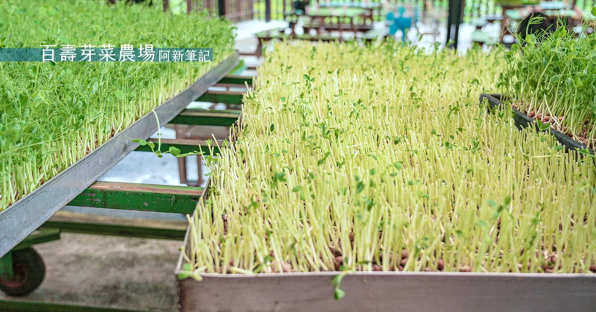 百壽有機芽菜農場,百壽芽菜農場,百壽農場,獅潭芽菜農場,獅潭農場